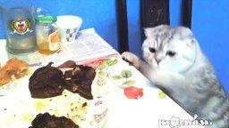 Смотреть Кошачьи проказы на кухне