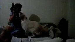 Каждому бы таких собак иметь в детстве смотреть видео прикол - 1:24