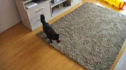 Кошачья выполнимая миссия смотреть видео прикол - 0:59