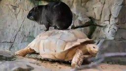 Смотреть Едем на черепахе