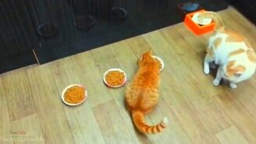 Топ трогательных кошек смотреть видео прикол - 3:17