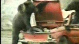 Медведи и запорожец смотреть видео прикол - 0:51