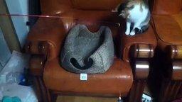 Смотреть Два кота и удочка
