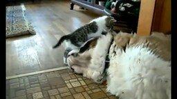 Весёлые и забавные коты смотреть видео прикол - 8:11
