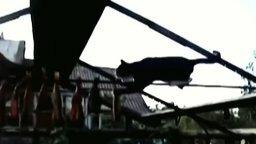 Кот ловит вяленую рыбу смотреть видео прикол - 1:03