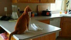 Смотреть Рыжик и холодильник