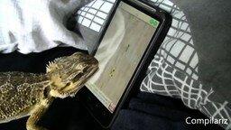 Смотреть Животные играют на планшете