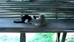 Смотреть Макака дразнит котёнка