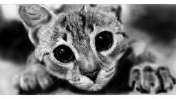 Смотреть Рисуем кошачий портрет