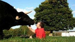 Дружба человека и быка смотреть видео прикол - 2:55