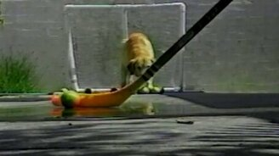 Собака-хоккеист