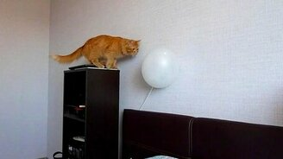 Рыжик против шарика смотреть видео прикол - 0:34