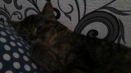 Кошка, которая храпит смотреть видео прикол - 1:09