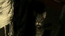 Смотреть Смешной кот Хей