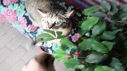 Вкусная конопля для кошки