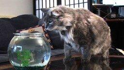 Смотреть В аквариуме рыбка, а над головой акула