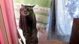 Смотреть Кот-паникёр просится домой