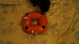 Смотреть Сделайте игрушку своей кошке!