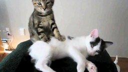 Смотреть Прикольные кошки и собаки