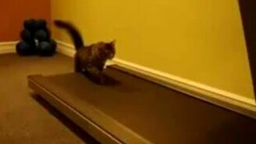 Смотреть Кошки на беговой дорожке