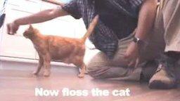 Как распутать наушники с помощью кота смотреть видео прикол - 1:22