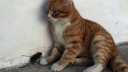 Рыжий кот и мышка-малышка смотреть видео прикол - 0:58