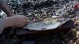 Учитесь, как чистить рыбу смотреть видео прикол - 0:47
