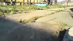 Утки атакуют электрика смотреть видео прикол - 0:55