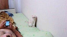 Смотреть Патриотичная кошка