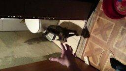 Не пускает в туалет смотреть видео прикол - 1:14