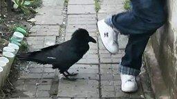 Смотреть Дикий ворон, а говорящий