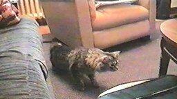 41 самый эффектный кошачий прыжок смотреть видео прикол - 1:34