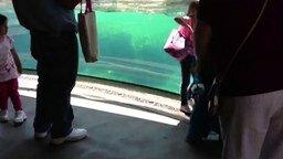 Смотреть Морской лев и девочка