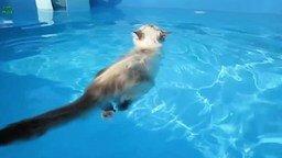 Смотреть Кошки, которые любят воду