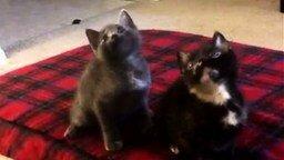 Смотреть Самые синхронные котята