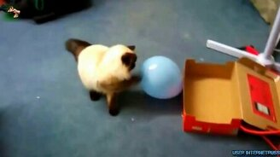 Смотреть Кошки и шарики