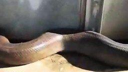 Забавная змея смотреть видео - 0:17