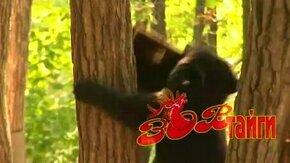 Смотреть Медведь на пасеке