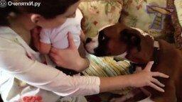 Смотреть Кошки, собаки и маленькие детишки