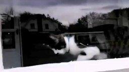 Смотреть Кот терроризирует почтальона