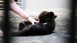 Смотреть Забавный пучеглазый медвежонок
