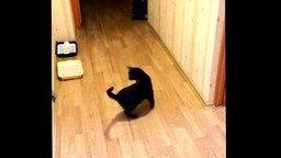 Закружило кота смотреть видео прикол - 0:15