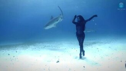 Смотреть Танец с акулами