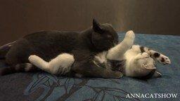 Осторожно, кошачья любовь! смотреть видео прикол - 0:54
