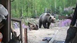 Против медведицы с медвежатами не попрёшь смотреть видео прикол - 0:52