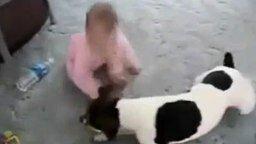 Собака, ребёнок и пищалка смотреть видео прикол - 1:20