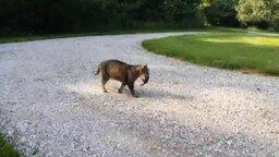 Смотреть Бурундук против кота