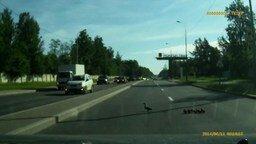 Утки переходят дорогу смотреть видео прикол - 0:59