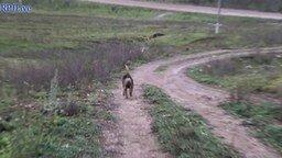 Прогулка деревенской псины смотреть видео прикол - 1:48