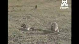 Смотреть Кролик охотится на удава